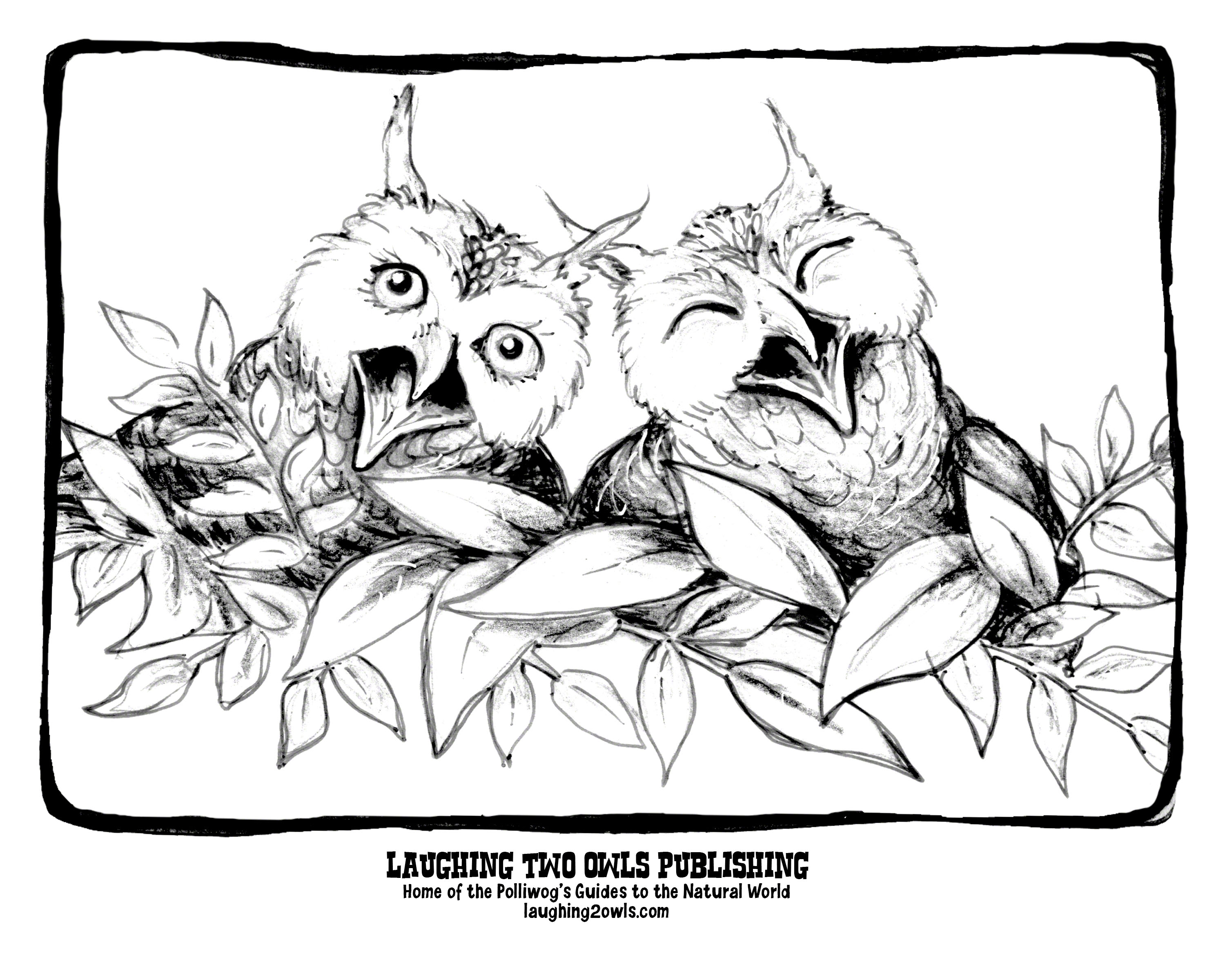 coloring pages laughing two owls